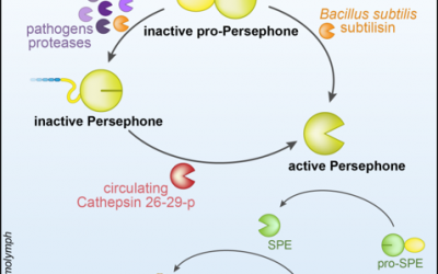 N-terminal oriented proteomics approach