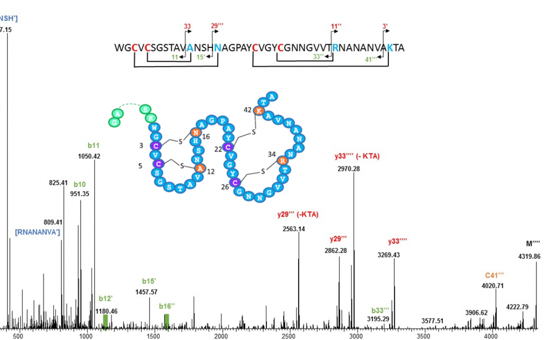 Structure of bacteriocins produced by the human gut symbiont revealed by Top-Down MS